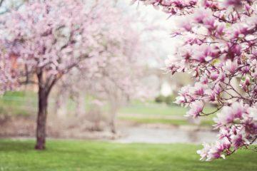 Bomen in de bloei