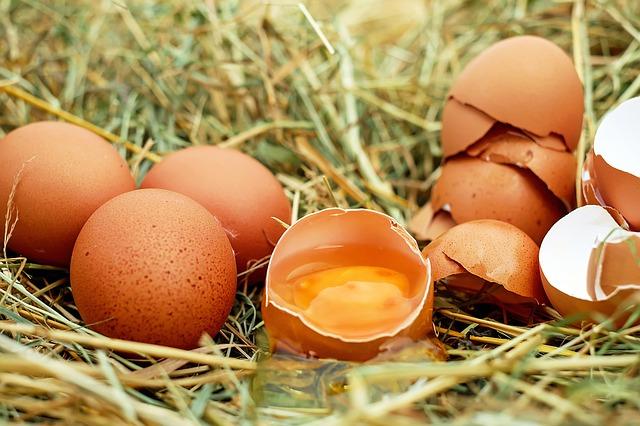 eieren in gras