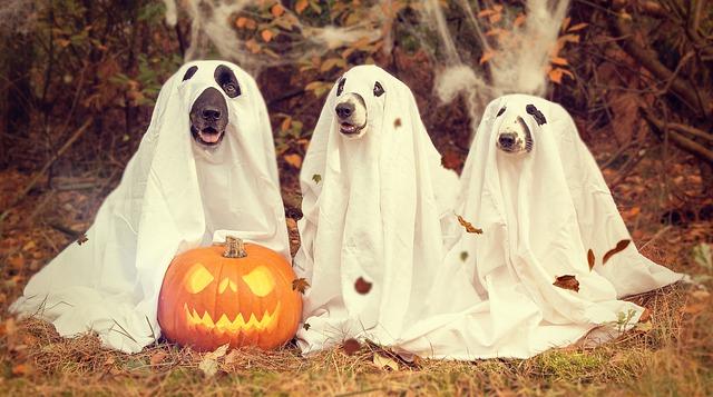 honden in laken - met halloween