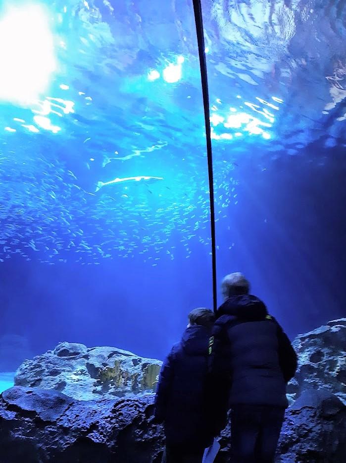 In de tunnel in Blijdorp met de haaien boven ons.