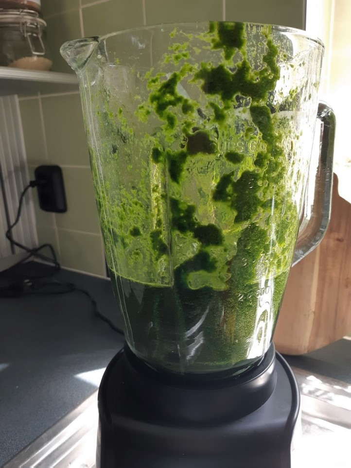 maggiplant in de blender