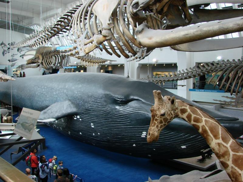 Opgezette dieren in het national history museum in Londen